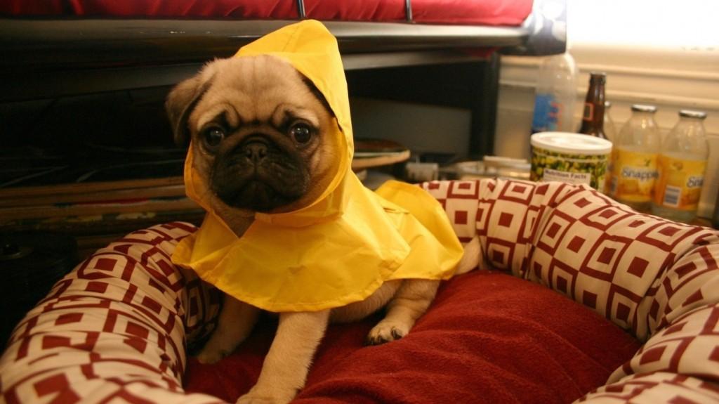 dog winter rain coat how to make