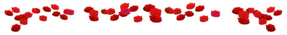 rose-petals
